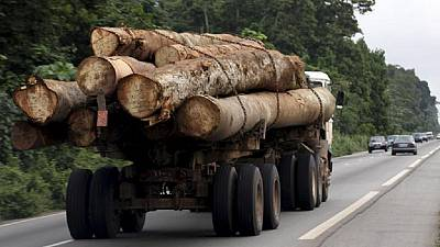 Gabon president fires vice, forestry minister over timber scandal
