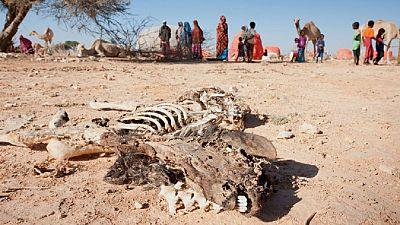 Somalie: 710 millions de dollars pour lutter contre la famine