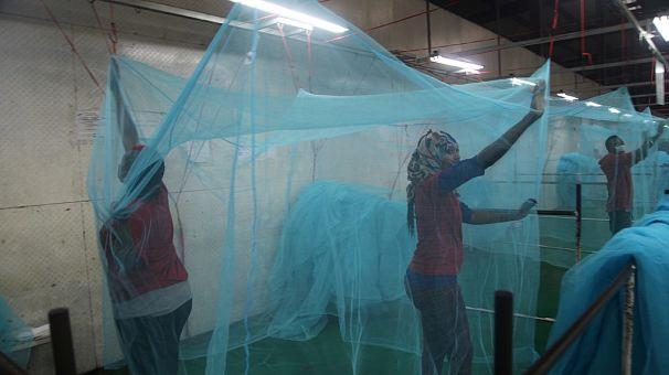 The World Health Organization declares Algeria free of deadly malaria disease