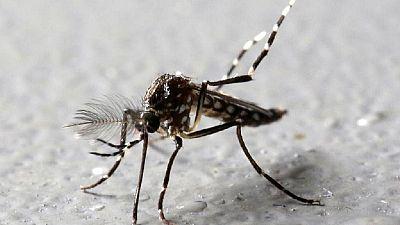 Congo Pointe Noire moves to combat mosquito borne chikungunya fever
