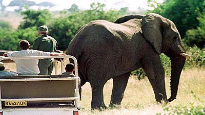 Botswana : réactions passionnées après le rétablissement de la chasse aux éléphants
