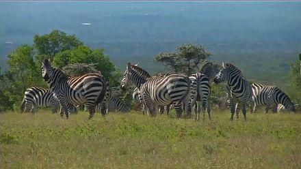 Kenya:  un laboratoire technologique pour protéger les espèces menacées d'extinction