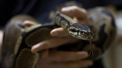 Nigerian clerk charged over $100,000 state funds 'eaten' by snake