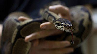 Nigeria : le serpent mangeur de millions de nairas n'a pas convaincu la police anti-corruption