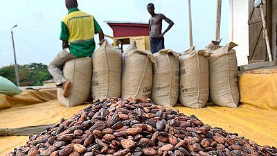 Cacao : Ghana et Côte d'Ivoire suspendent leurs ventes dans l'attente d'un prix minimum