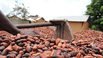 La Côte d'Ivoire et le Ghana suspendent les ventes de leur cacao