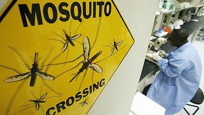 Burkinabe scientists attempt killing mosquitoes with spider venom