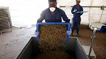 Human feaces producing organic insect feed