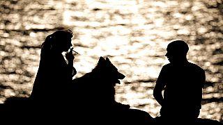 États-unis : des chiens anti-stress au chevet des anciens combattants