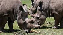 Rwanda's Akagera park hosts 5 endangered rhinos relocated from Europe