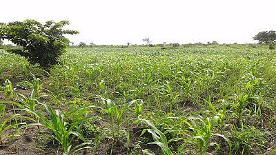 Économie : au Togo, l'agriculture porte la croissance plus haut que prévu