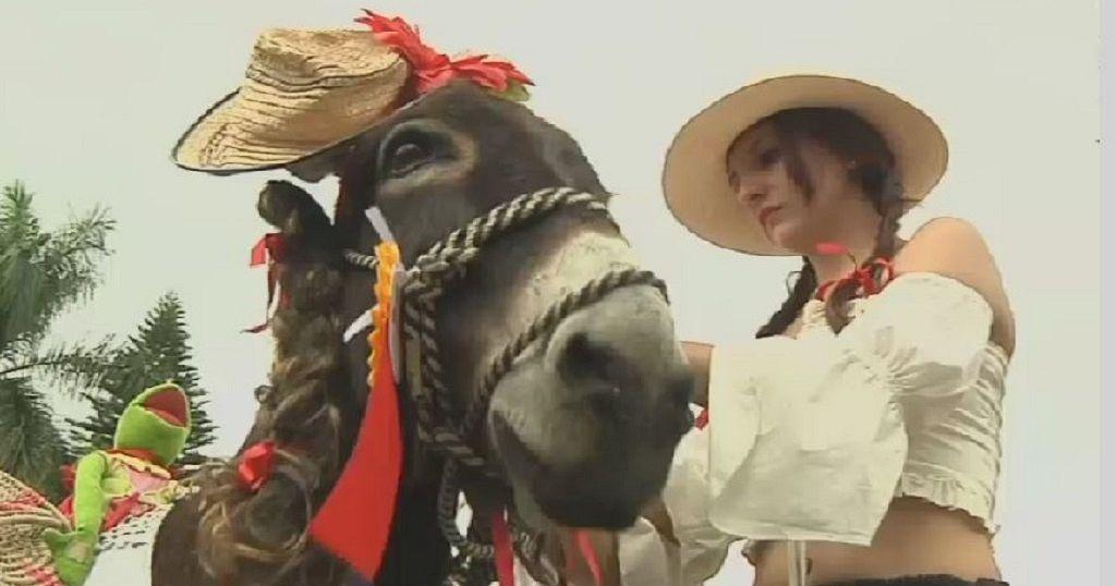 Colombia's Donkey festival