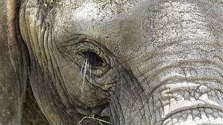 Killing of Namibia desert elephant stirs conservationists