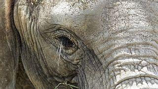 Killing of Namibia desert elephant stirs conservationists