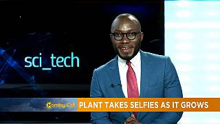 Plant takes selfie as it grows [Sci tech]