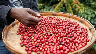 Zimbabwe coffee back on top