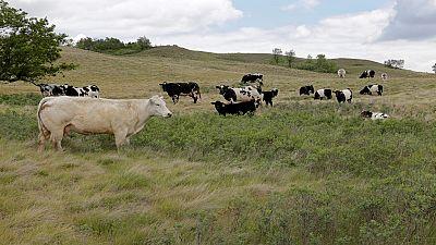 L'insécurité affecte le marché du bétail au Nigeria