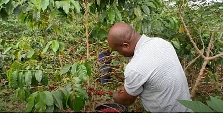 Birth of cafe culture in coffee growing country