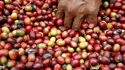 Rwandans picking up on the coffee culture