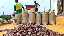 Vente du cacao : Ivoiriens et Ghanéens reculent