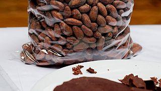 New chocolate sweetened cocoa pulp