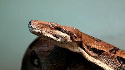 Nigeria: un serpent met des parlementaires en fuite