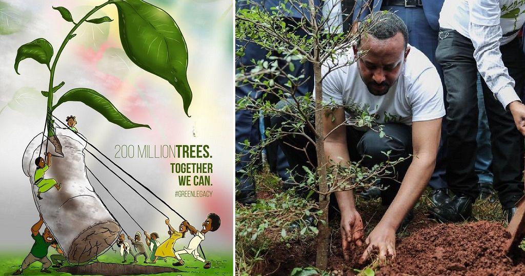 Over 353 million seedlings in 12-hours: Ethiopia 'breaks