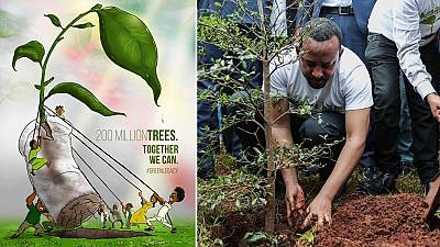Over 353 million seedlings in 12-hours: Ethiopia 'breaks' tree-planting world record