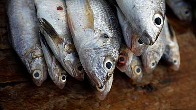 Ghana running out of sea food due to overfishing