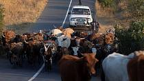 S.Africa: App enables investors to benefit from rising global beef demand