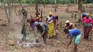 Guinea battling a drought caused by deforestation