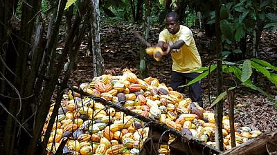 Ghana to raise cocoa farmgate prices by 5.2%