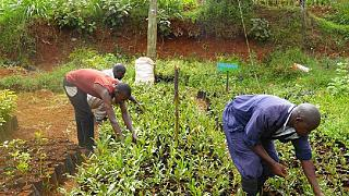 Kenyan farmers make use of biogas
