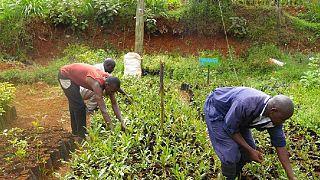 Kenya : les bienfaits du biogaz dans l'agriculture