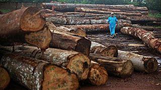 Scandale de bois au Gabon : plusieurs hauts responsables suspendus