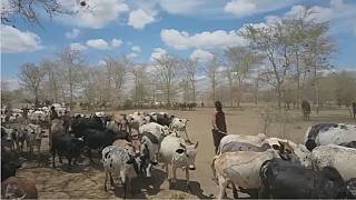 Uganda's pastoralists squeezed by climate change, negative government policy