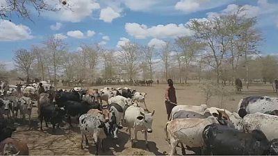 Ouganda: une saison favorable aux activités agropastorales