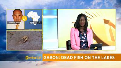 Gabon: Mystery over dead carp fish [The Morning Call]