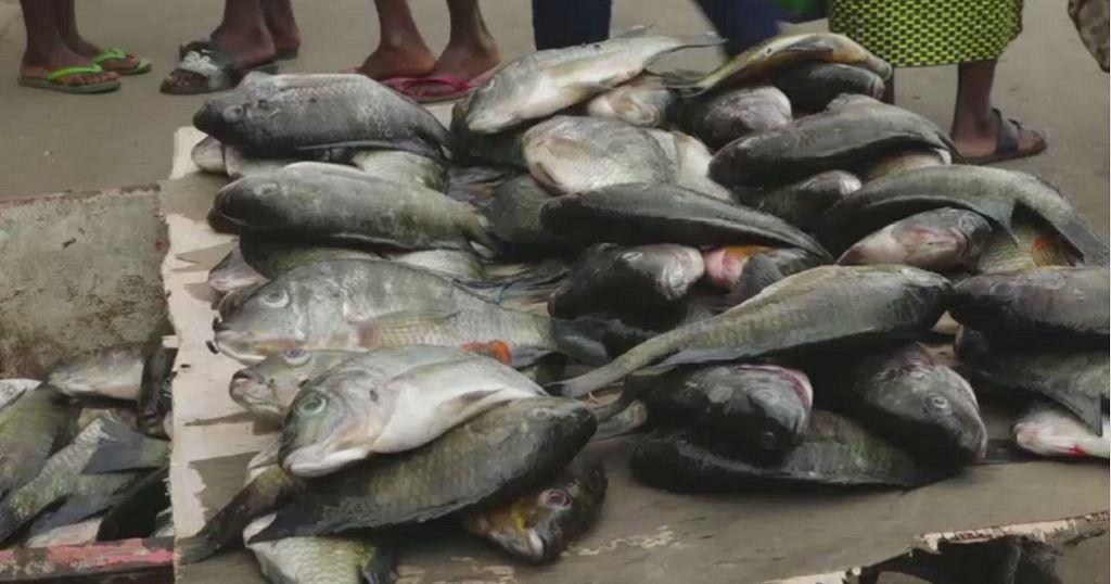 Gabon-pénuries : la pêche et la vente des carpes interdites