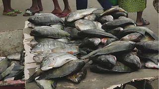 Gabon-pénuries: la pêche et la vente de carpes interdites