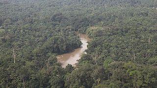 La RDC s'inquiète pour sa forêt faute d'énergie électrique