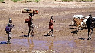 Dilemma of Uganda's Karimajong pastoralists: Climate change vs. govt policy