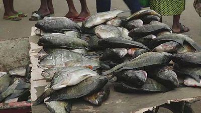 [CORRECTION] Gabon : l'interdiction de pêcher et de vendre des carpes est maintenue