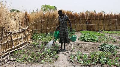 South Sudanese return to agriculture again after years of war destroyed their farms