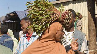 Ethiopie : des cures de désintox pour les accros du khat