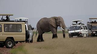 Video: Conservationists hail ban on trade in African elephants