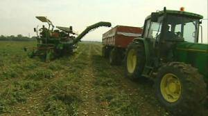 Taste of farming for Brussels workers