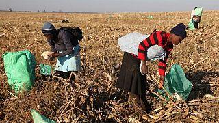 Zimbabwe : quel avenir pour les employés de Mugabe ?