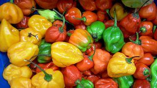 Exportation : le piment, futur nouveau filon du Rwanda ?