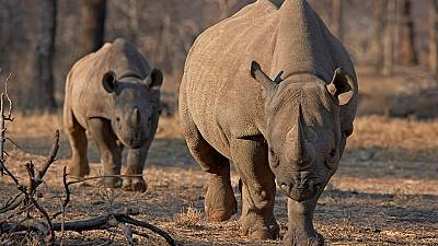South Africa to redouble work with communities in conserving Rhinos
